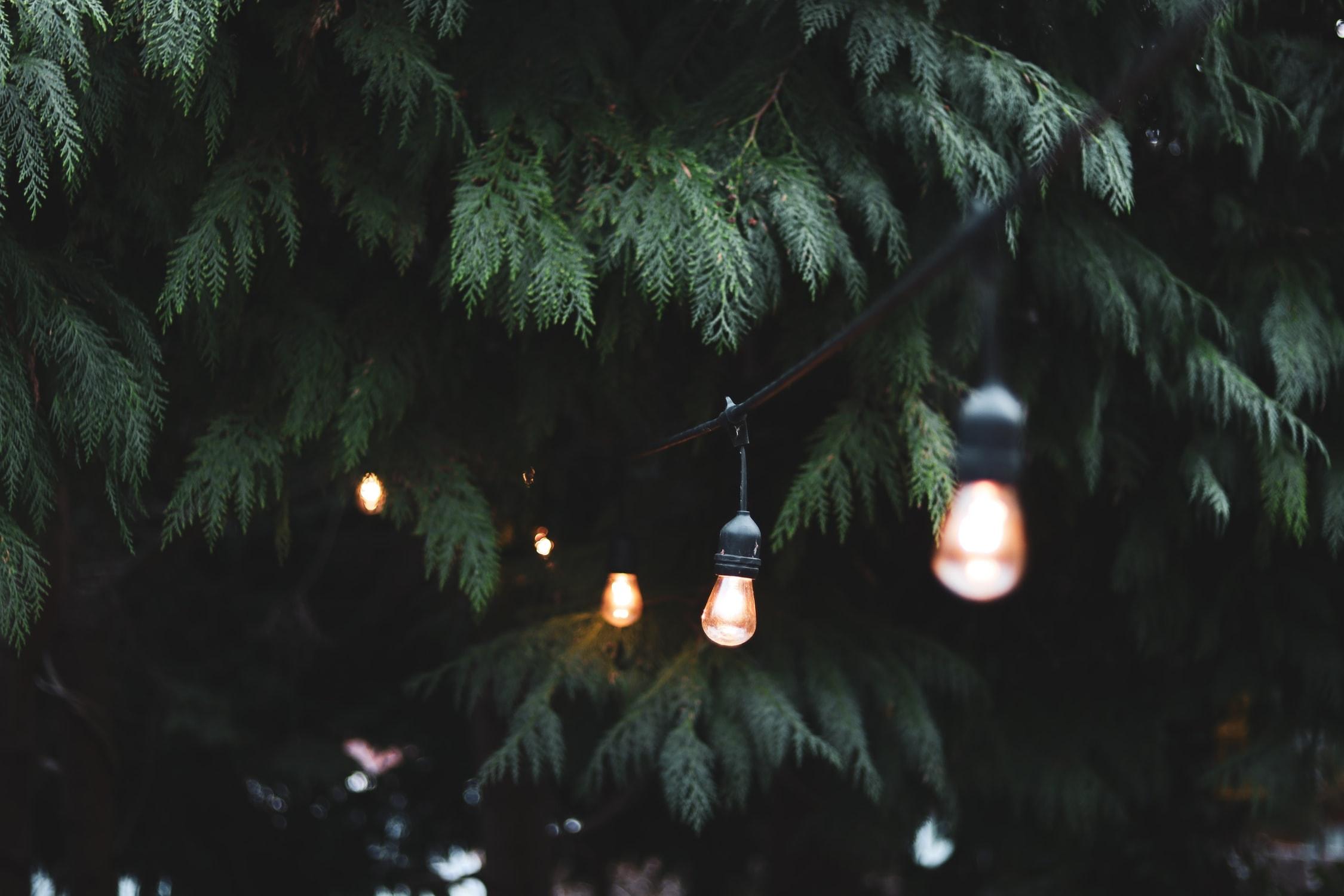 festoon bulbs wedding